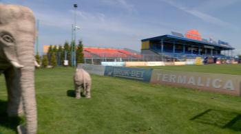 Stogi siana za trybuną i plastikowe słonie przy murawie. To tu w przyszłym sezonie zagra Ekstraklasa