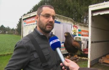 Belgijski klub piłkarski ma problem z... królikami. Do walki ze zwierzętami zaangażowano psa i orła